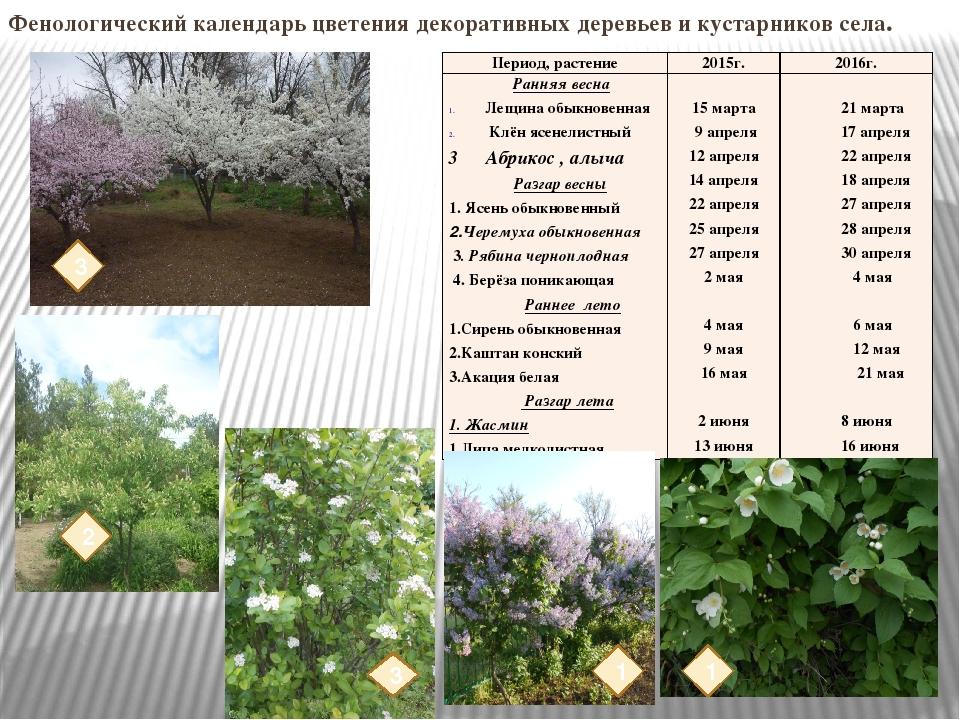 Календарь цветения и плодоношения деревьев и кустарников