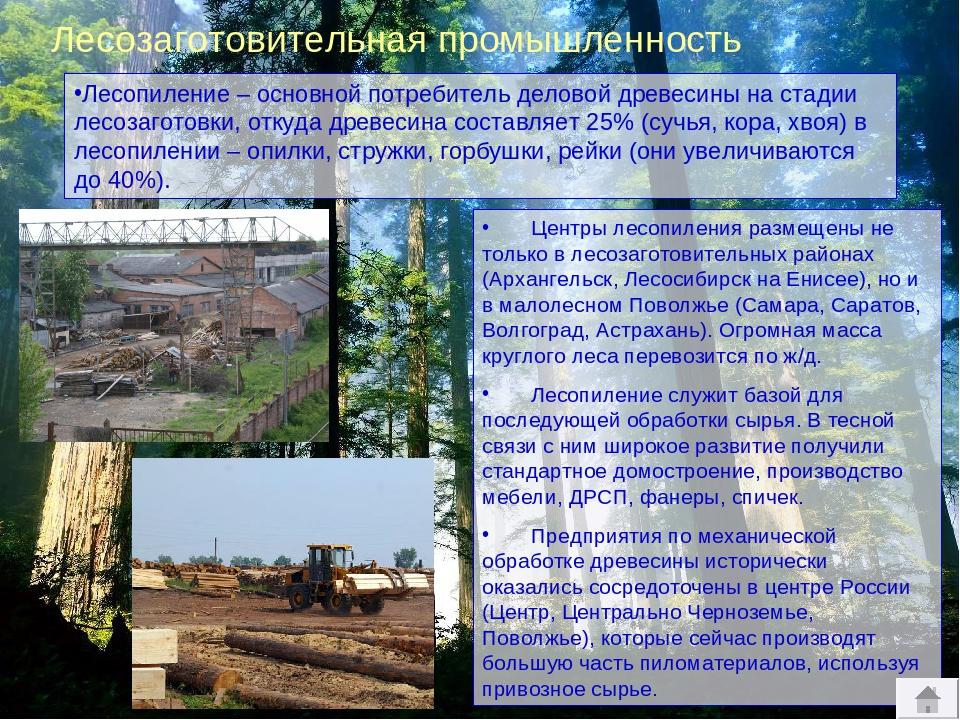 Лесная промышленность россии презентация