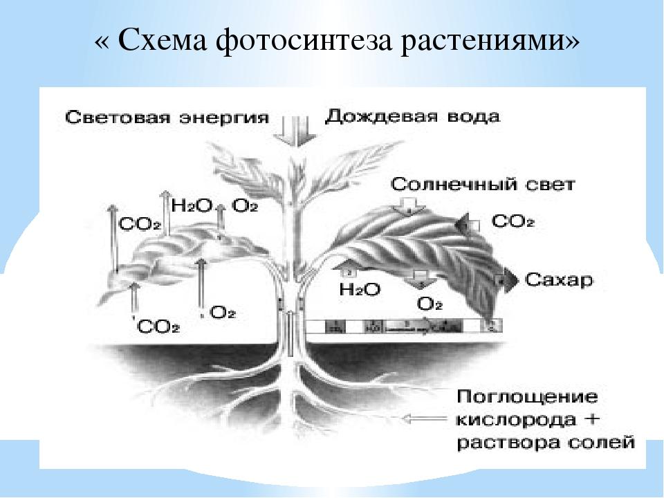 Реферат на тему фотосинтез кратко условие открытка