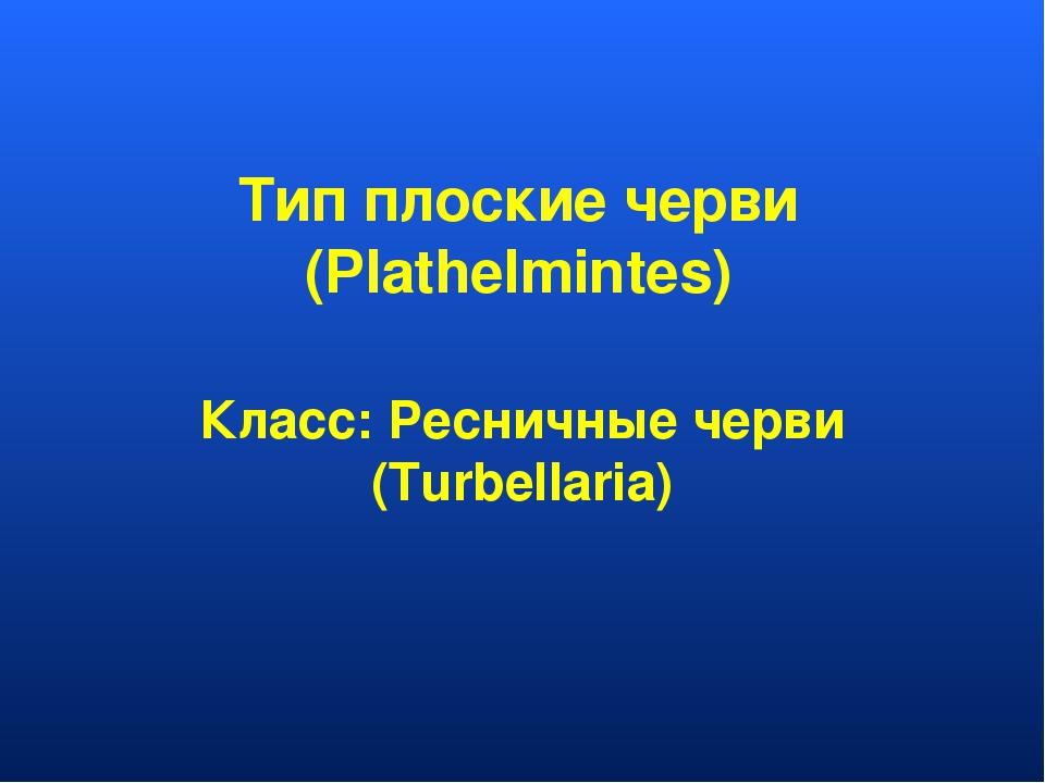 Тип плоские черви (Plathelmintes) Класс: Ресничные черви (Turbellaria)