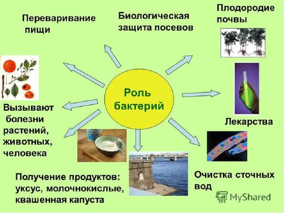 Материал по биологии на тему Защита опыта работы учителя биологии  Защита темы по биологии