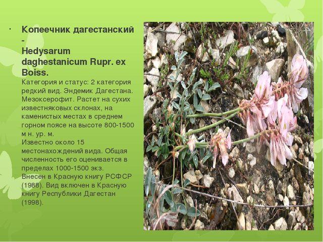 Презентация по биологии ботанике на тему КСЕРОФИЛЬНЫЕ  Копеечник дагестанский hedysarum daghestanicum rupr ex boiss Категория и