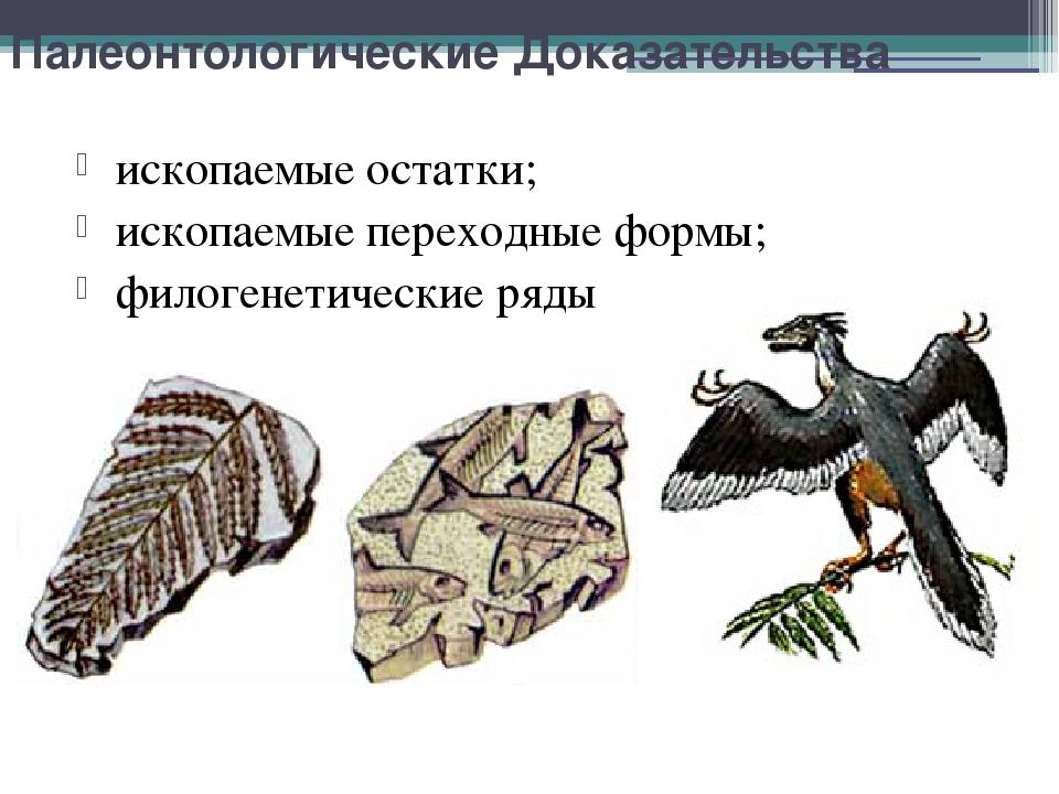 Палеонтологические Доказательства ископаемые остатки; ископаемые переходные ф...