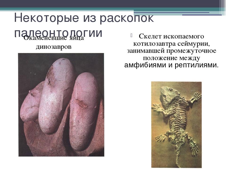 Некоторые из раскопок палеонтологии Скелет ископаемого котилозавтра сеймурии,...