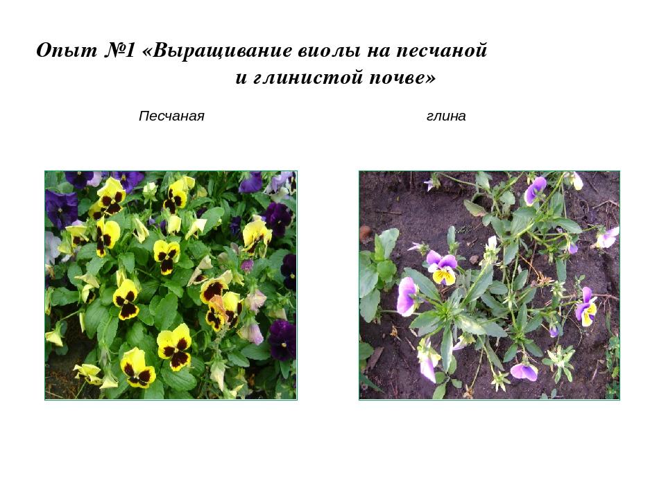 Особенности выращивания на песчаной почве 65