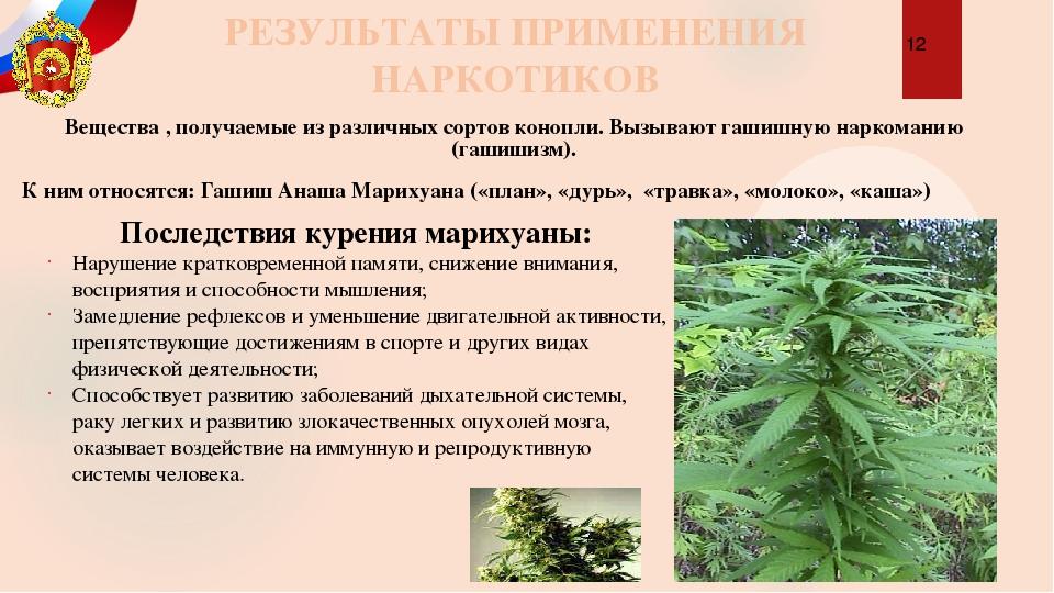 К чему ведет курение марихуаны семена конопли для урала