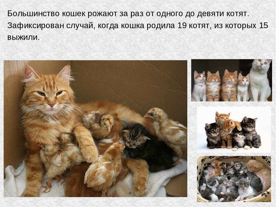 помнить, что беременная кошка пришла в дом приметы анимация, заставки