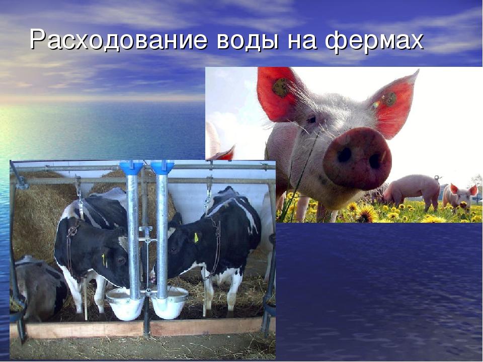Расходование воды на фермах