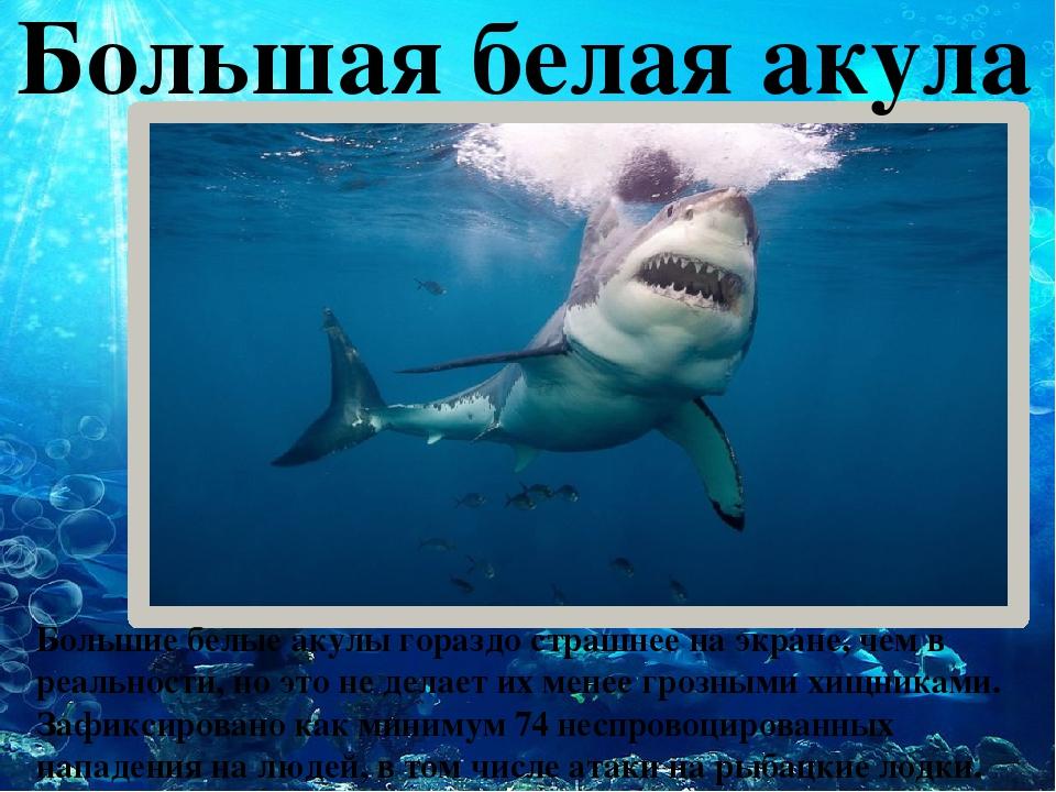 Большая белая акула Большие белые акулы гораздо страшнее на экране, чем в ре...