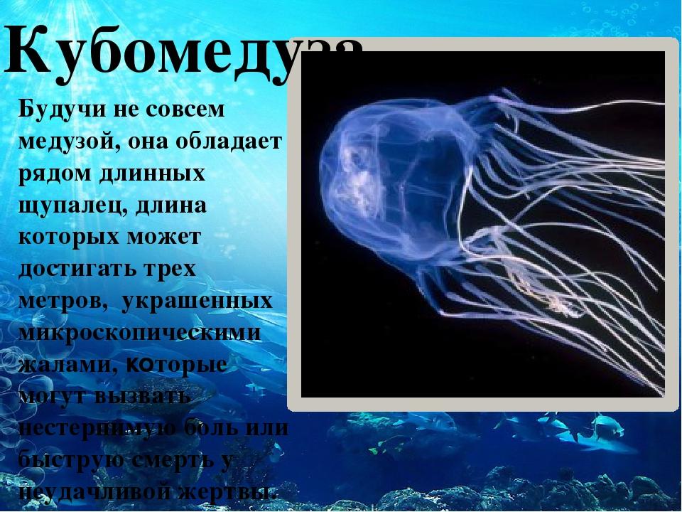 Кубомедуза Будучи не совсем медузой, она обладает рядом длинных щупалец, дли...