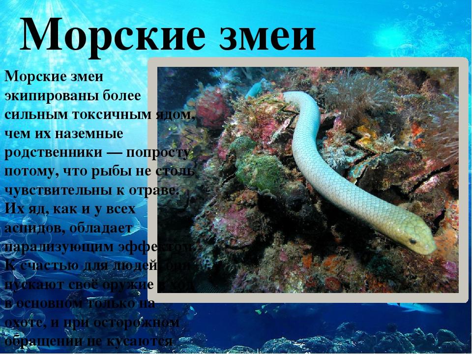 Морские змеи Морские змеи экипированы более сильным токсичным ядом, чем их н...