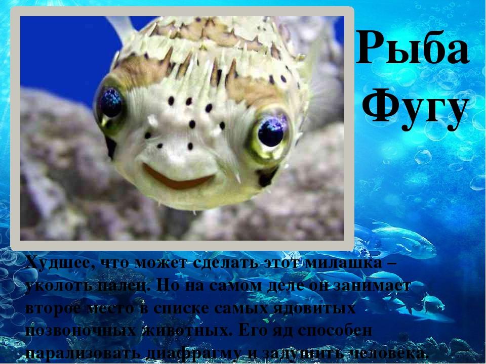 Рыба Фугу Худшее, что может сделать этот милашка – уколоть палец. Но на само...