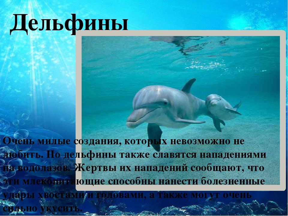 Дельфины Очень милые создания, которых невозможно не любить. Но дельфины так...