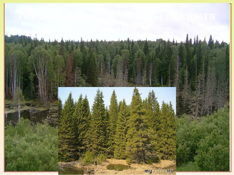 Половина нашей страны покрыта лесами.