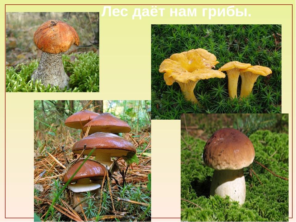 Лес даёт нам грибы.