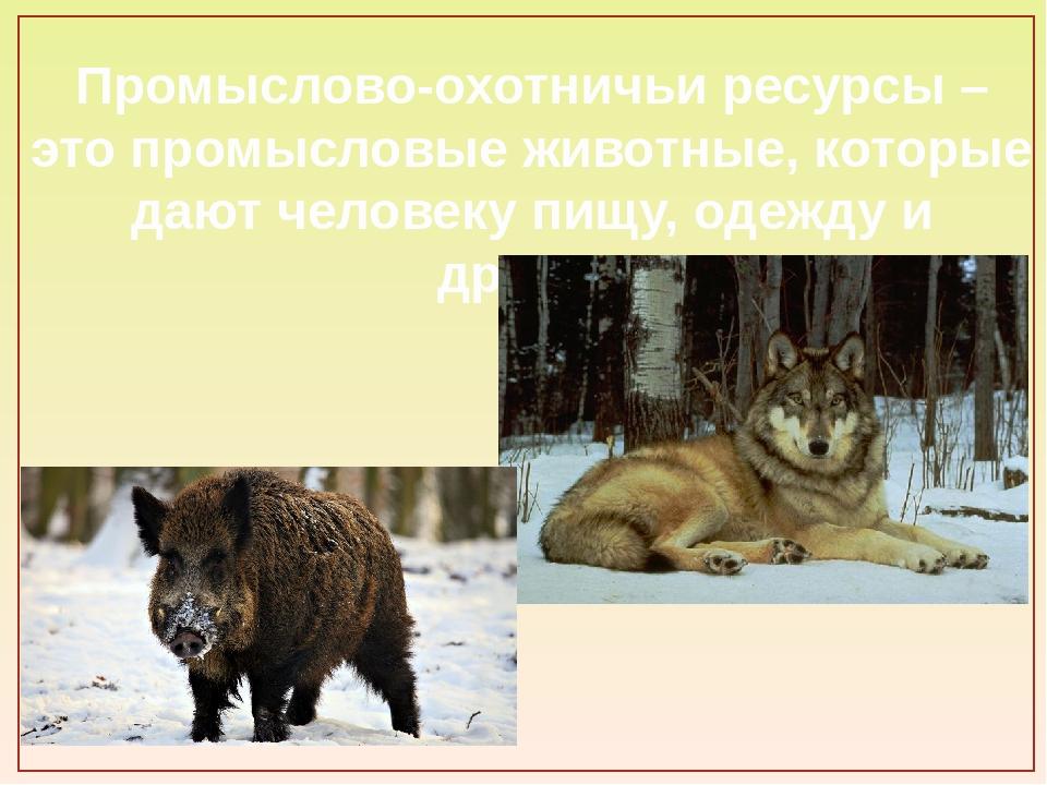 Промыслово-охотничьи ресурсы – это промысловые животные, которые дают человек...