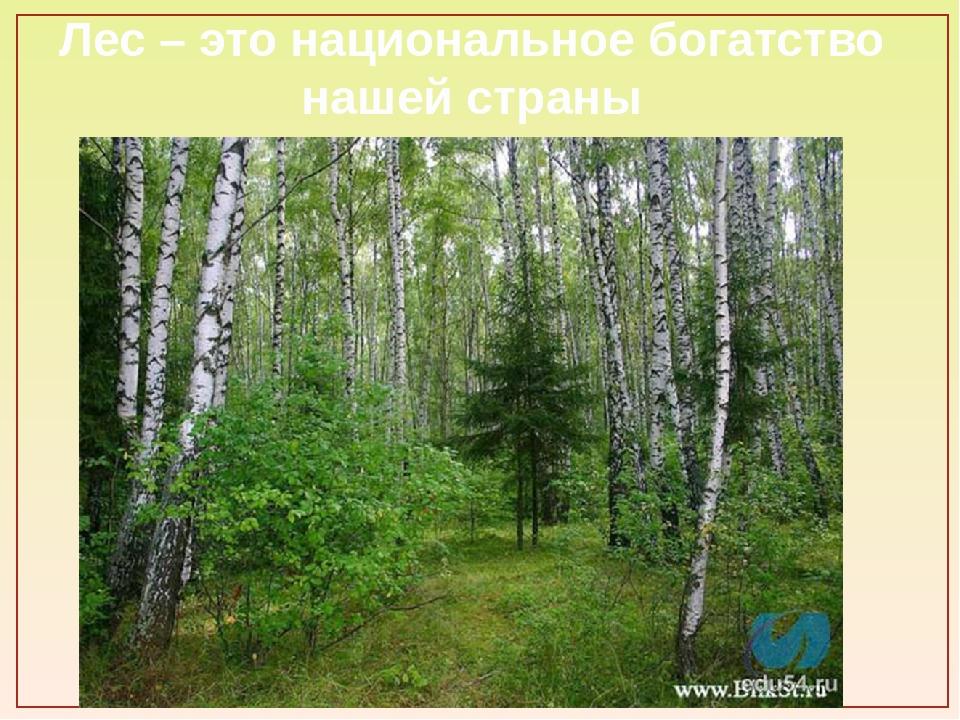 Лес – это национальное богатство нашей страны