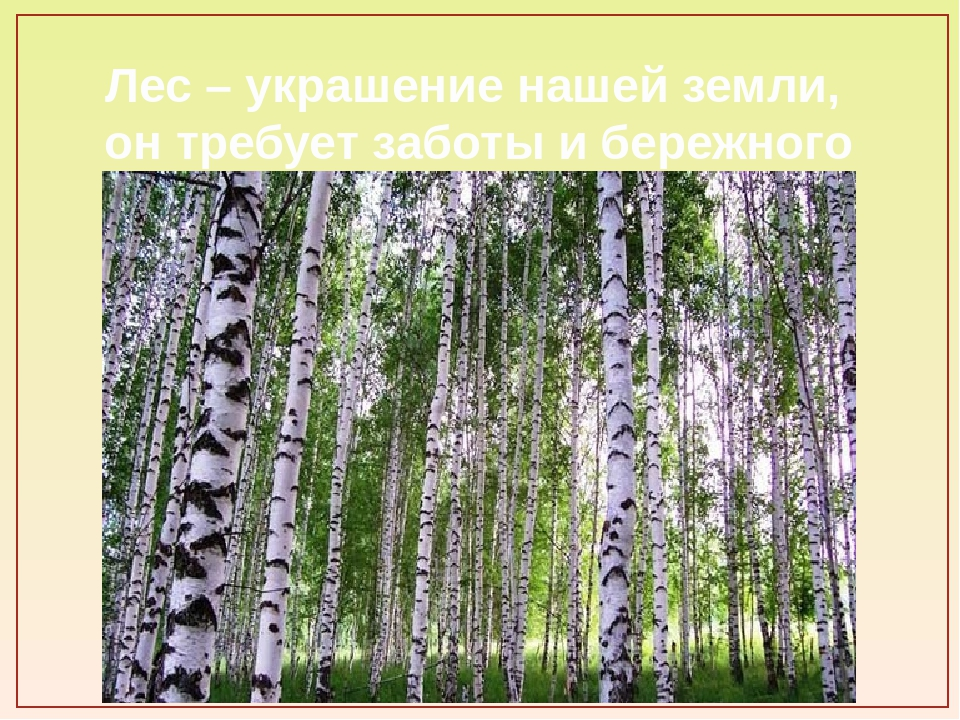 Лес – украшение нашей земли, он требует заботы и бережного отношения.