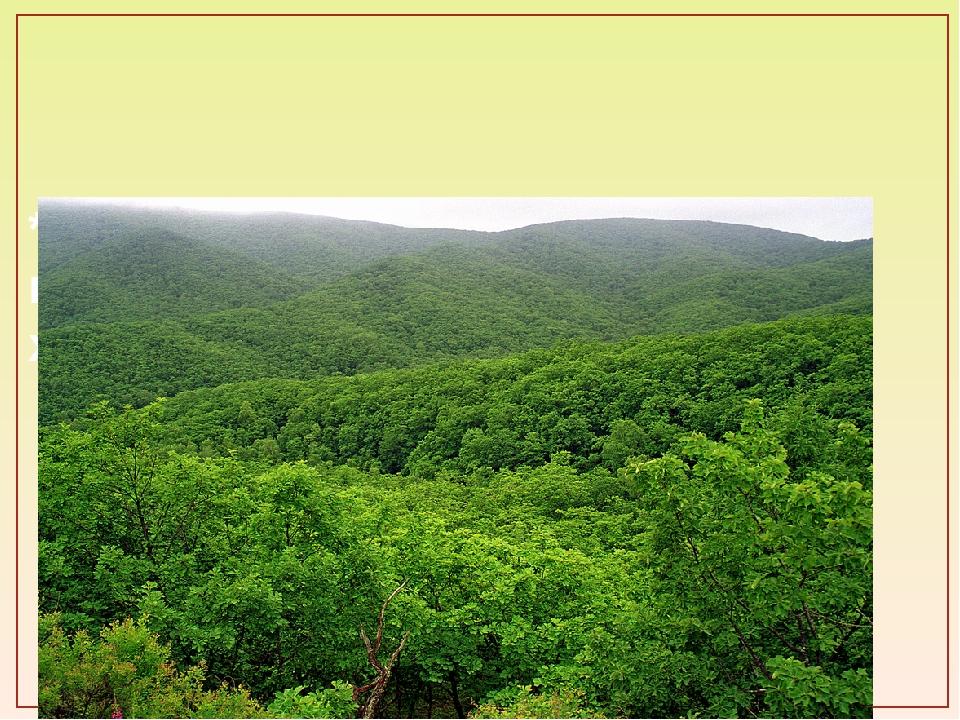 * ЛЕС защищает открытые пространства от засухи на юге и холодных ветров на с...