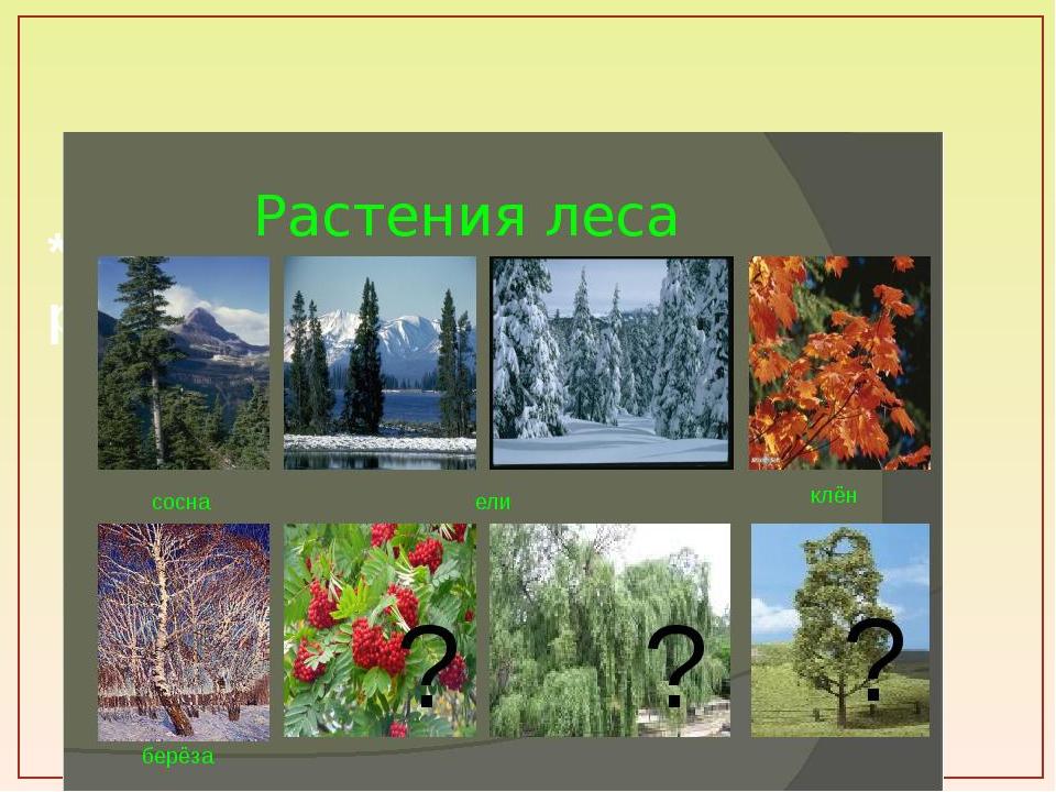 * ЛЕС даёт приют многим видам растений и животных.