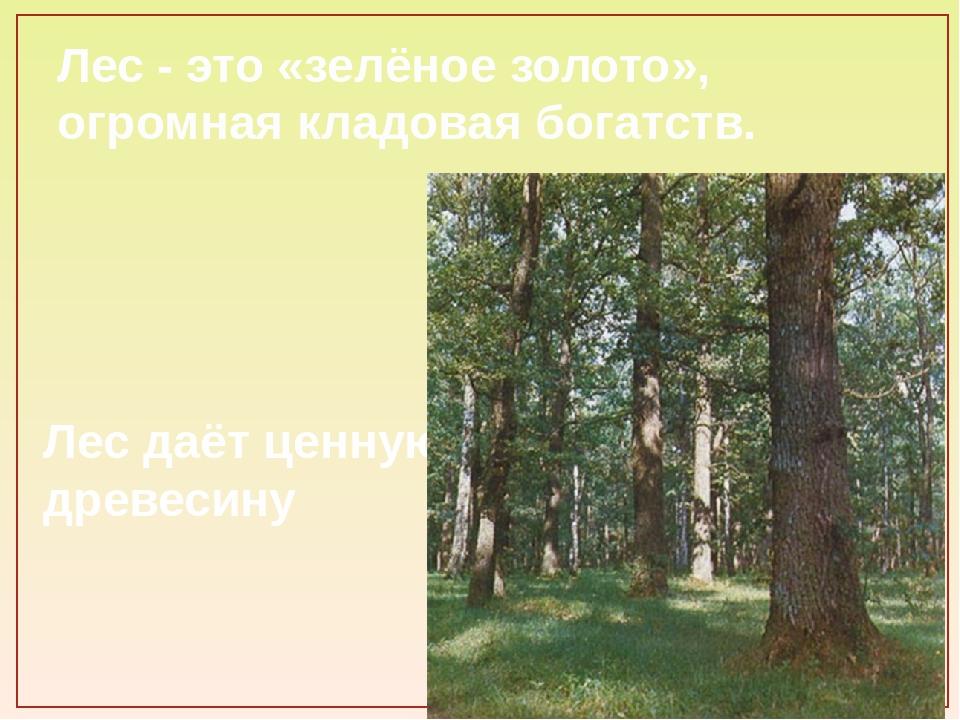 Лес - это «зелёное золото», огромная кладовая богатств. Лес даёт ценную древе...
