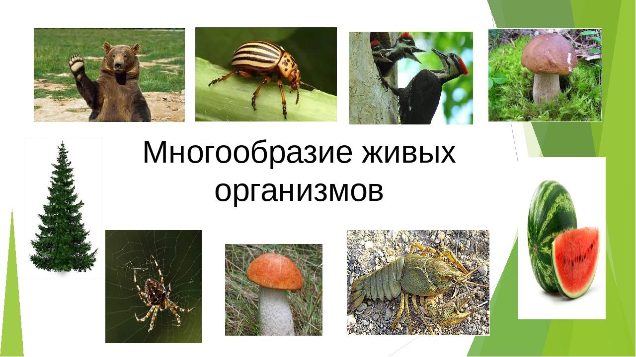Картинки многообразия живого организма