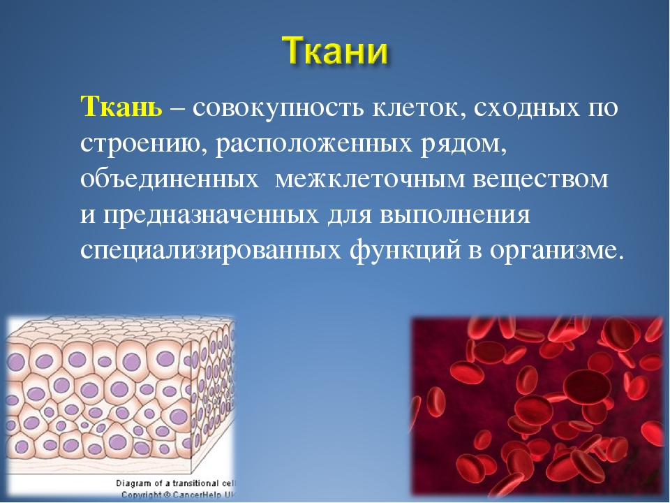 Ткань – совокупность клеток, сходных по строению, расположенных рядом, объед...
