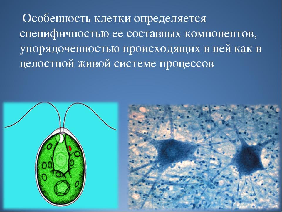 Особенность клетки определяется специфичностью ее составных компонентов, упо...