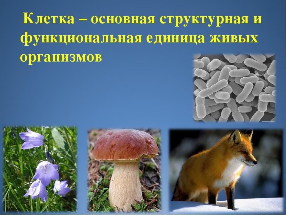 Клетка – основная структурная и функциональная единица живых организмов