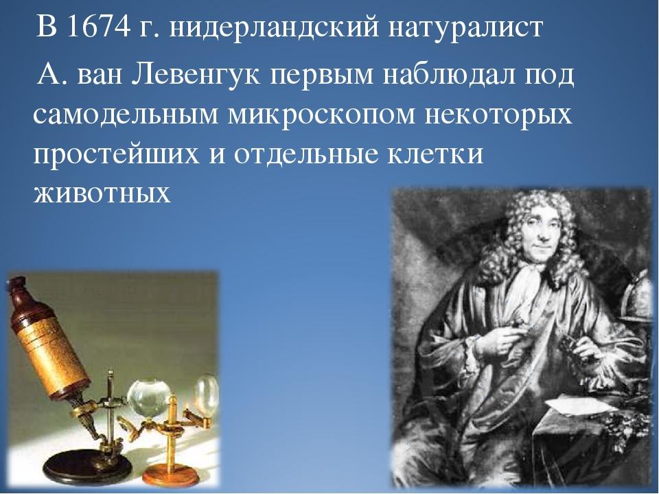 В 1674 г. нидерландский натуралист А. ван Левенгук первым наблюдал под самод...