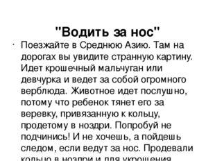 """""""Водить за нос"""" Поезжайте в Среднюю Азию. Там на дорогах вы увидите странную"""