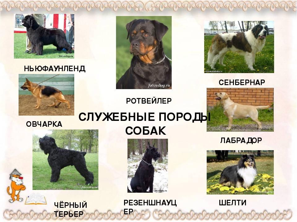 Описания пород собак с картинками