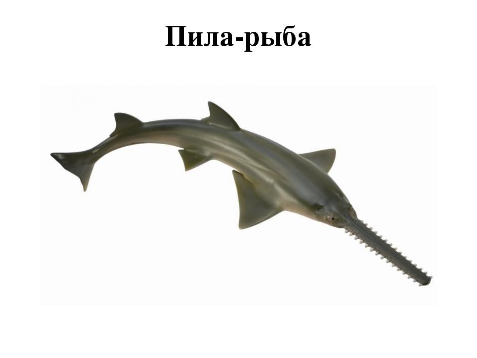 Пила-рыба