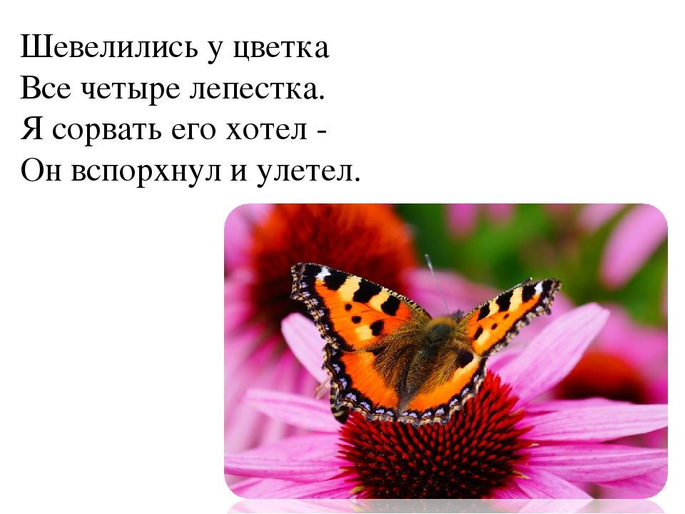 Шевелились у цветка Все четыре лепестка. Я сорвать его хотел - Он вспорхну...