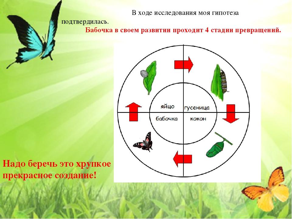 В ходе исследования моя гипотеза подтвердилась. Бабочка в своем развитии пр...