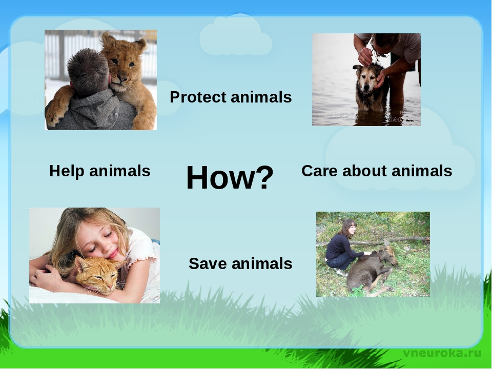animals must be protected essay Please review my ielts essay a growing number of people feel that animals should not be exploited by people and that they should have the same rights as humans, while others argue that humans must employ animals to satisfy their various needs, including uses for food and.
