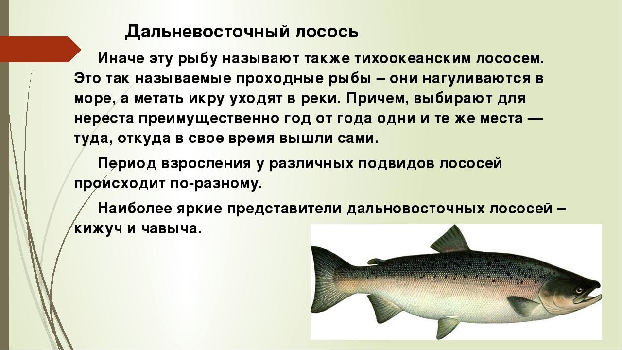 Особенно большое количество фосфора содержится в лососевых породах рыб