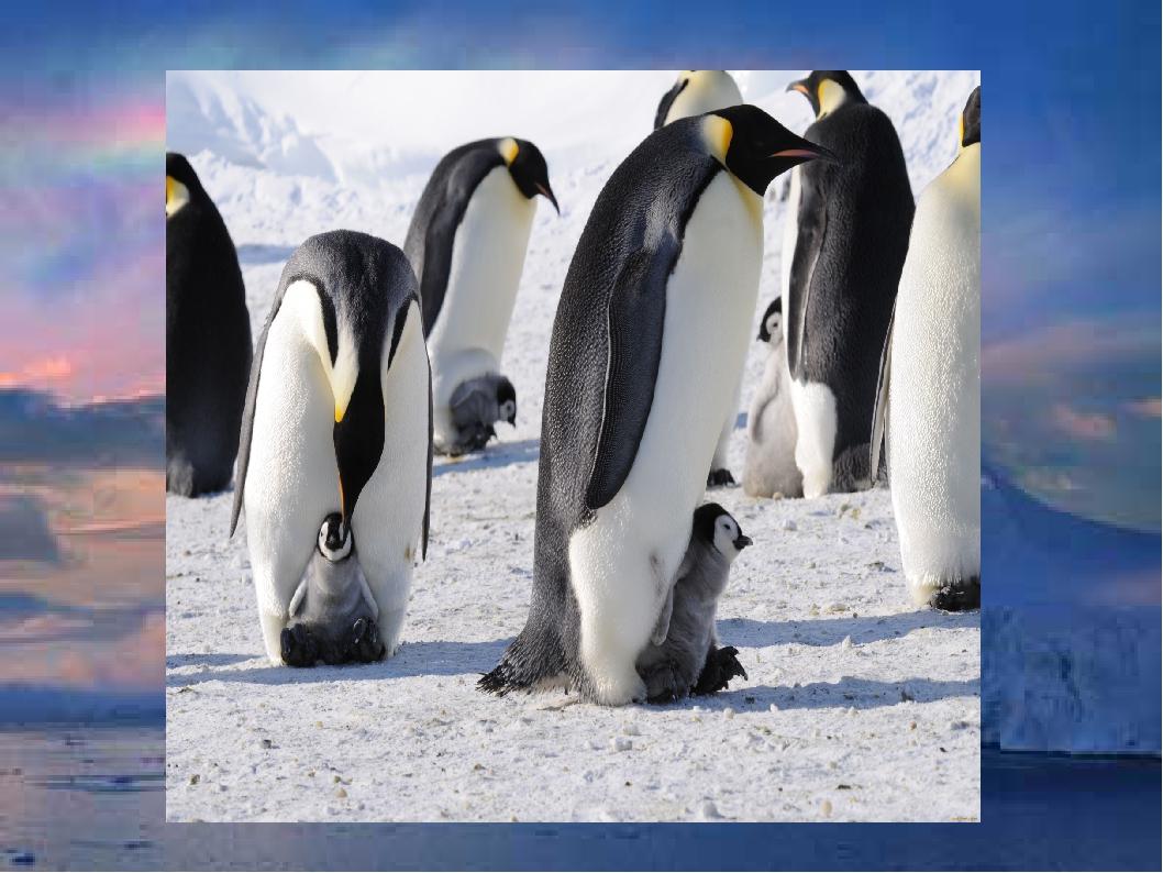 картинка животные арктики и антарктики ящерицей известно достаточно