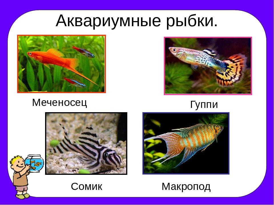 дворцы, древние аквариумные рыбки с названиями в картинках небольшом
