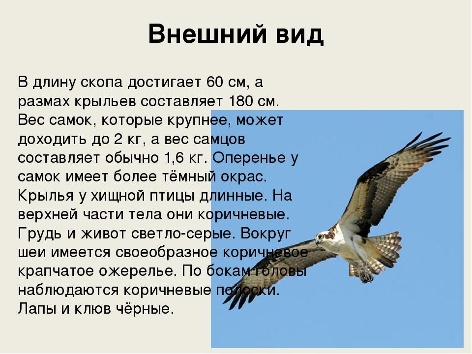 Скопа размах крыльев