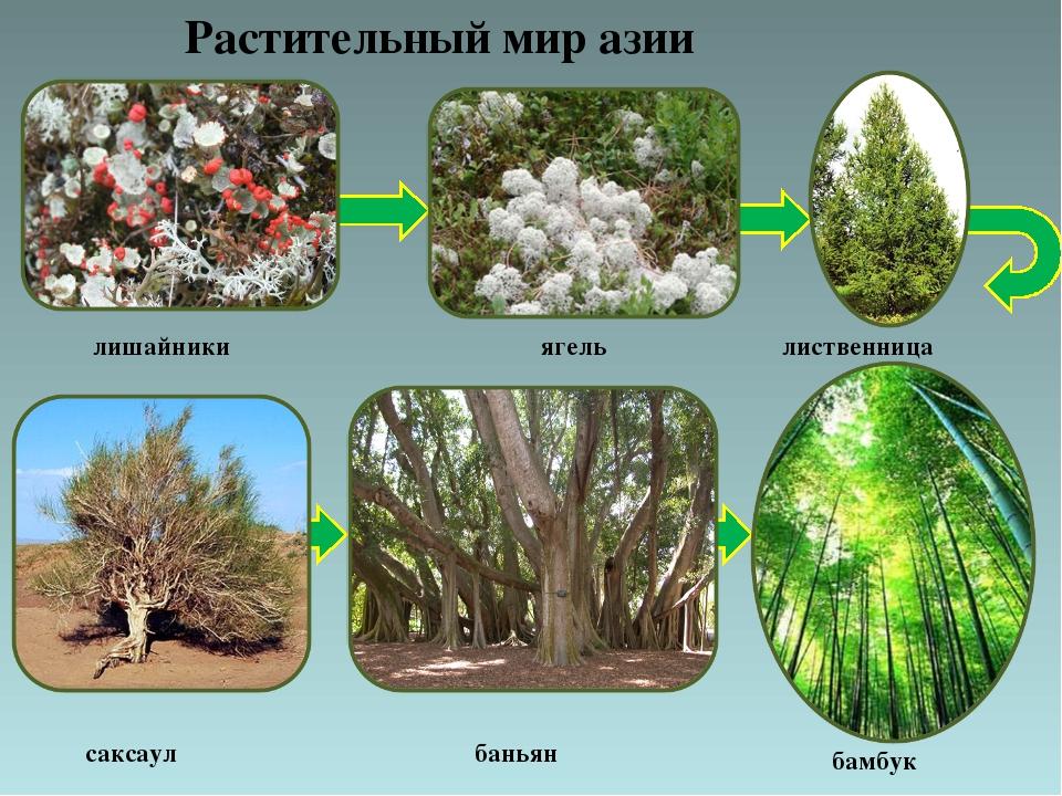 маневренность делают растения евразии фото с названиями ситуацию, которой