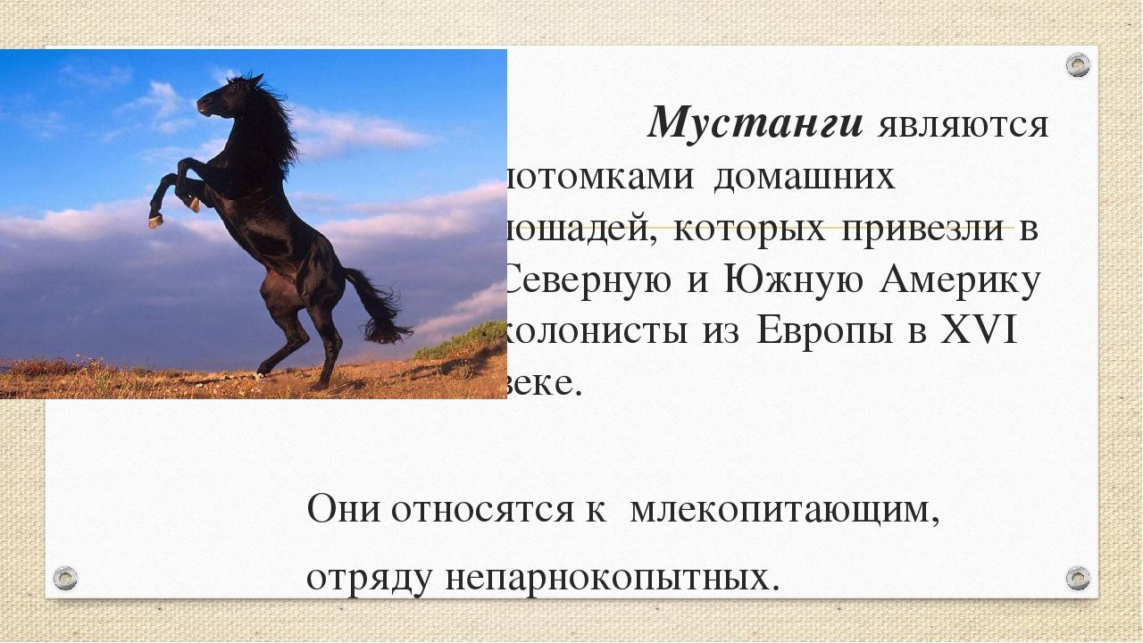 Мустанги являются потомками домашних лошадей, которых прив...