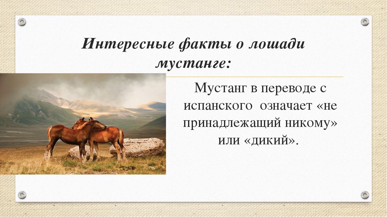 Интересные факты о лошади мустанге: Мустанг в переводе с испанского означает...