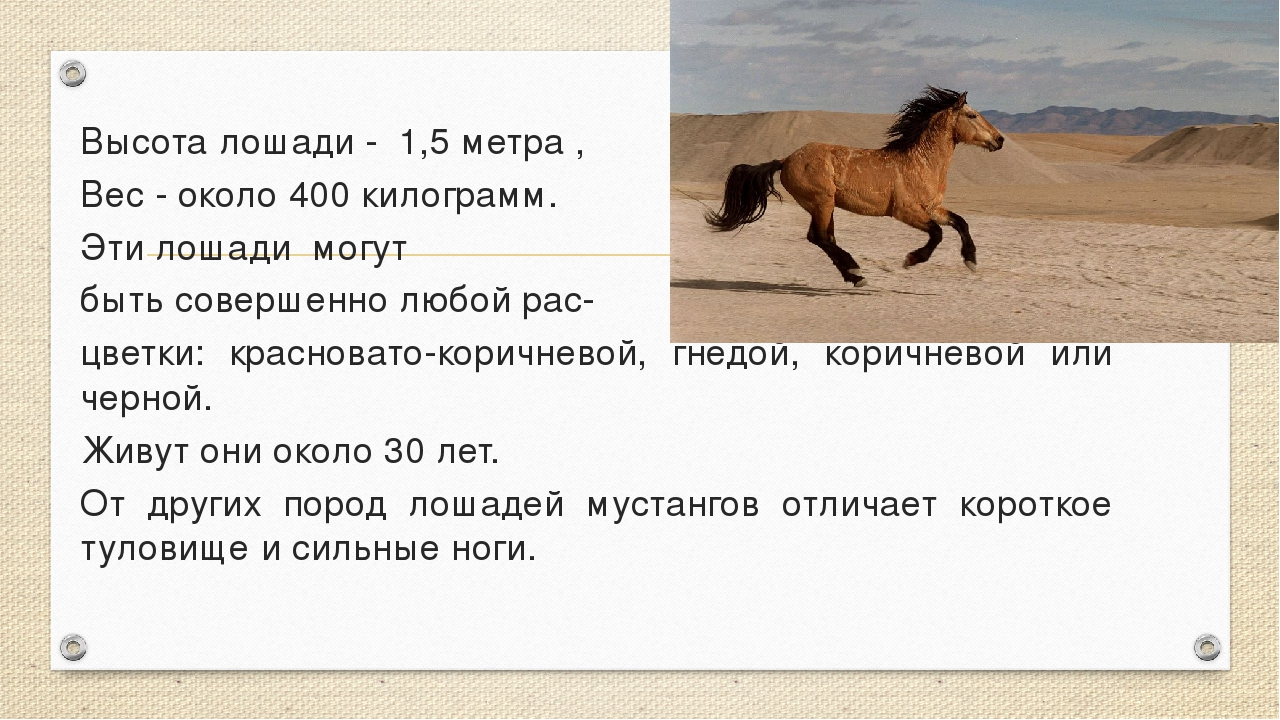 Высота лошади - 1,5 метра , Вес - около 400 килограмм. Эти лошади могут бы...