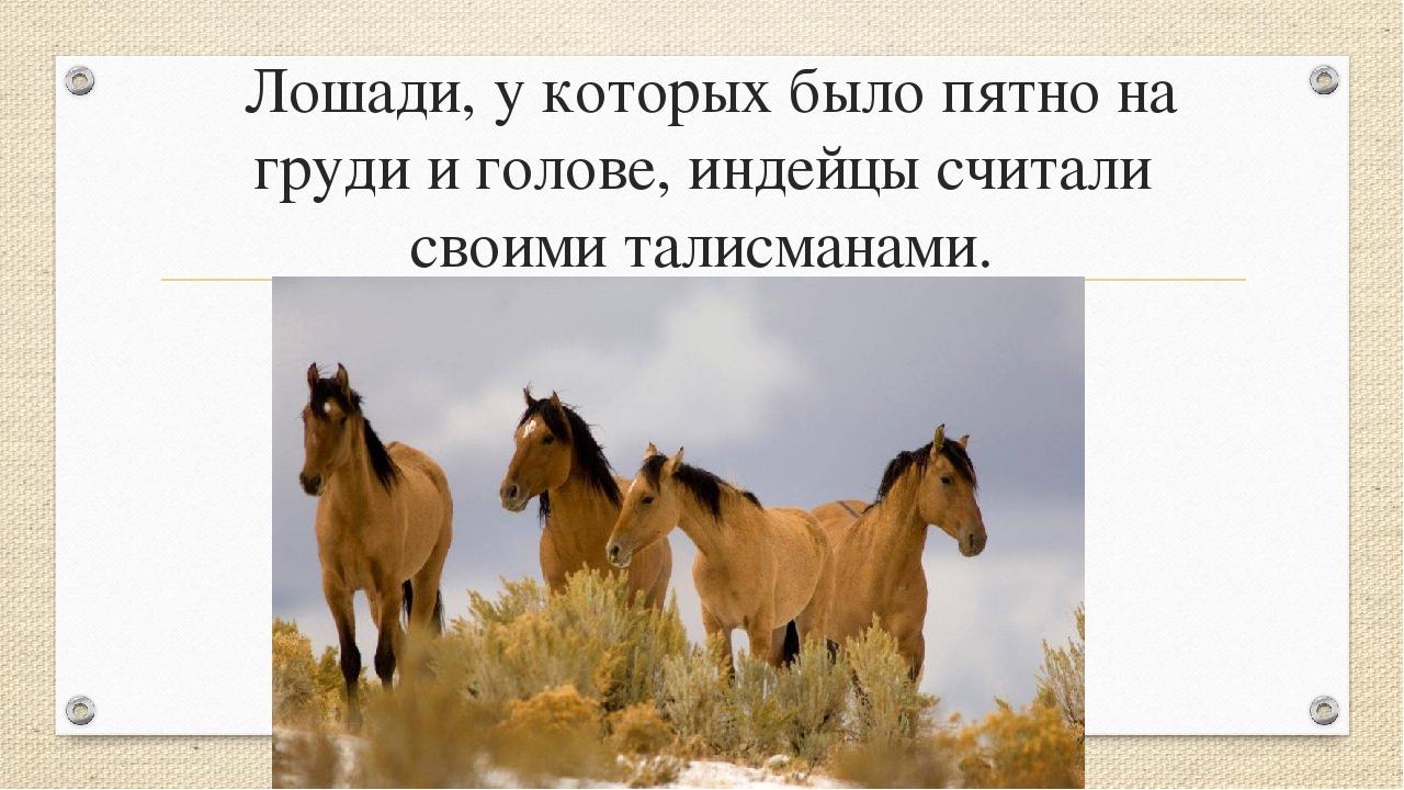 Лошади, у которых было пятно на груди и голове, индейцы считали своими талис...
