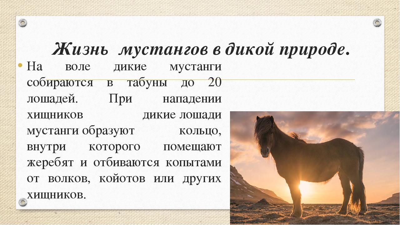 Жизнь мустангов в дикой природе. На воле дикие мустанги собираются в табуны д...