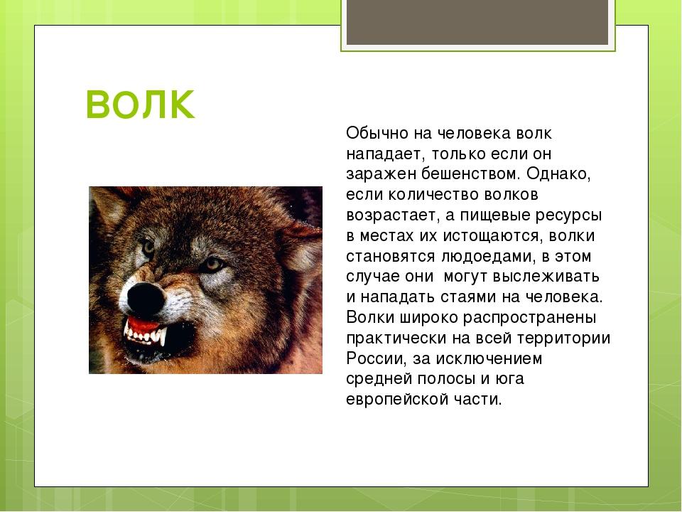 Беременная волчица самый опасный зверь 17