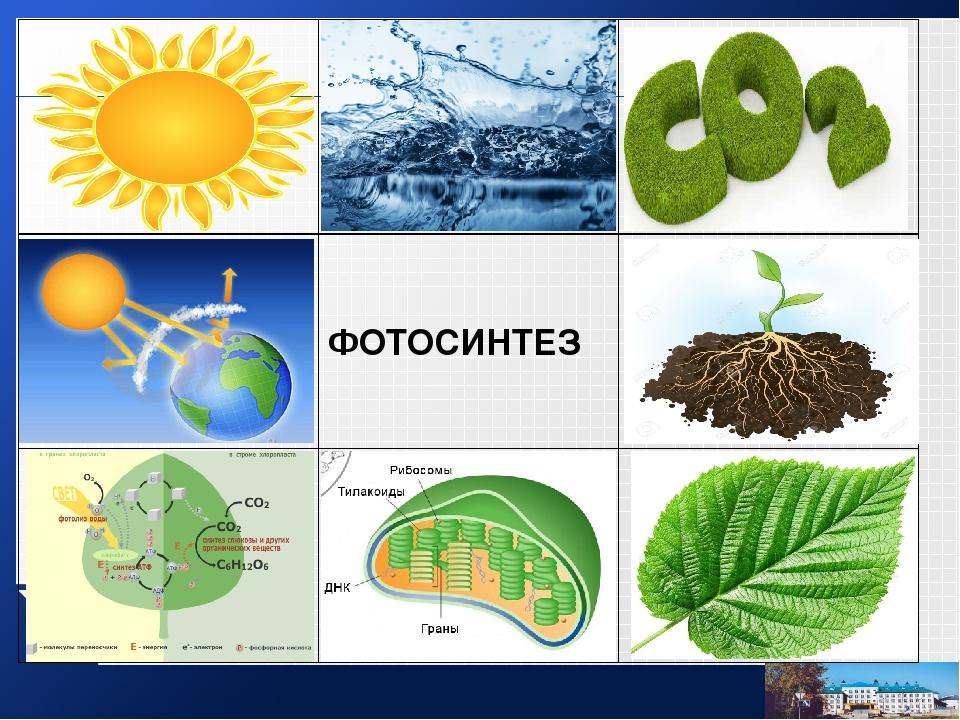 стройные топик по английскому про фотосинтез были