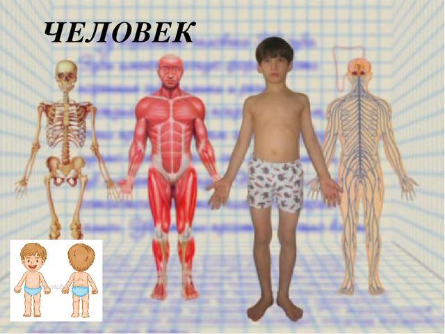 Анатомия тела в картинках для детей