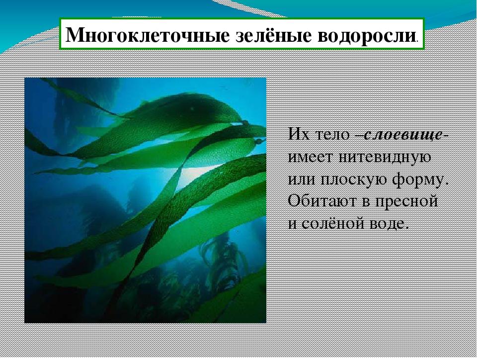 картинки водоросли одно и многоклеточные дней жил скромно